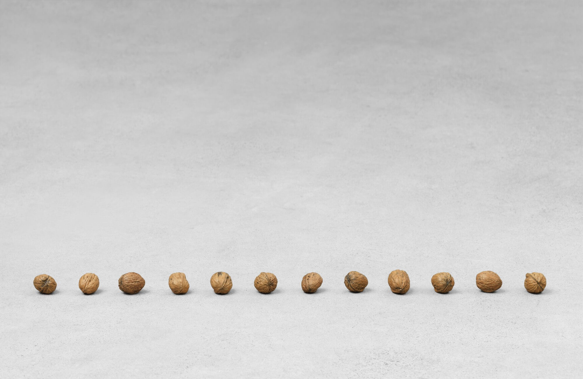 still.life. (twelve walnuts in a line); 12 parts | UGO RONDINONE