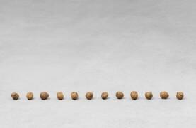 still.life. (twelve walnuts in a line); 12 parts | UGO RONDINONE