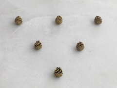 still.life. (six pine cones in a triangle) | UGO RONDINONE